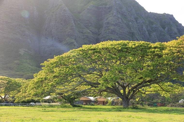 碧山旅行-夏威夷旅游-探访侏罗纪拍摄地—古兰尼牧场