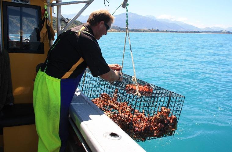 碧山旅行-龙虾大餐前的海钓