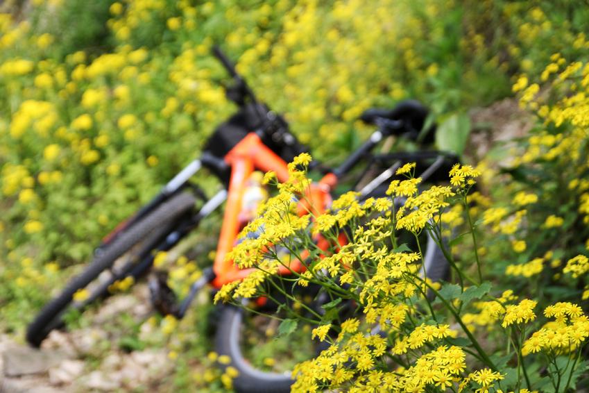 碧山旅行-自行车骑行,感受自然的律动