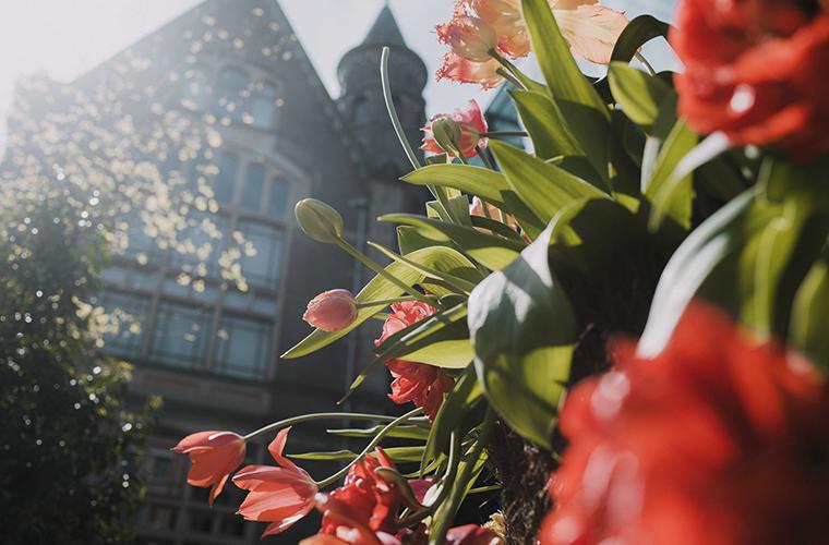 碧山旅行-萦绕郁金香芬芳的酒店