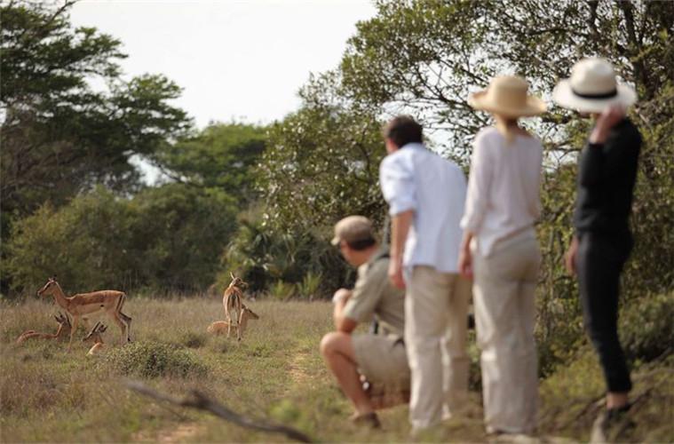 碧山旅行-追踪小羚羊的寻水之路