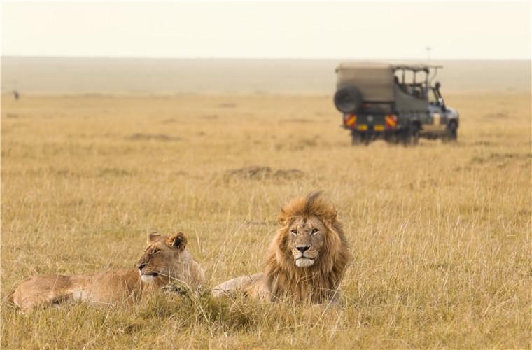 碧山旅行-坦桑尼亚旅游-马赛马拉国家自然保护区