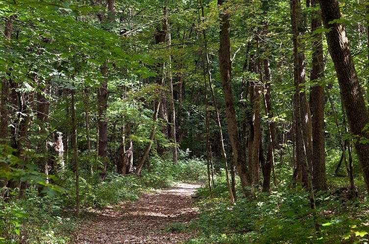 碧山旅行-漫步小径,聆听自然的声音