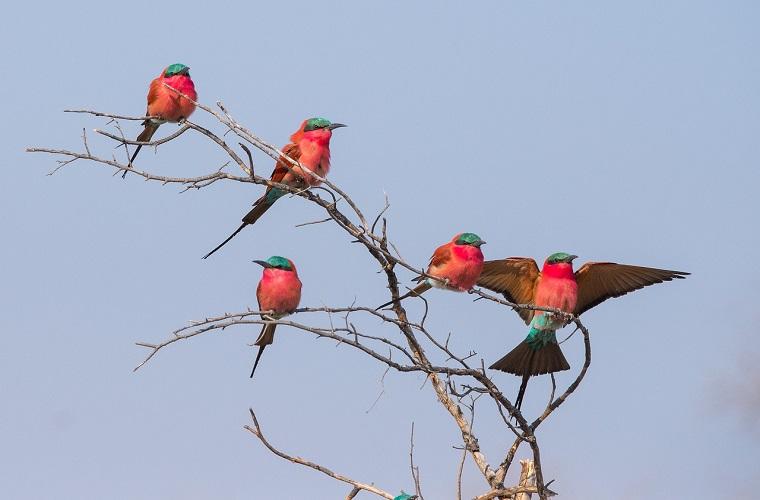 碧山旅行-出众的观鸟胜地