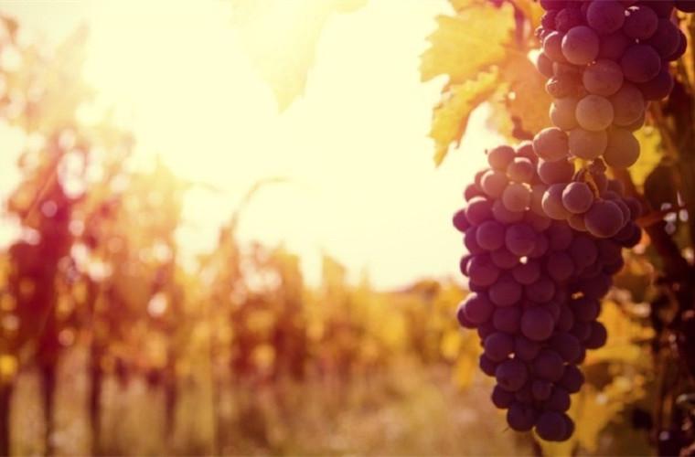 碧山旅行-美国旅游-葡萄酒乡纳帕谷