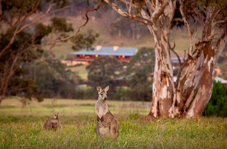 碧山旅行-澳洲旅游,悉尼与沃根谷