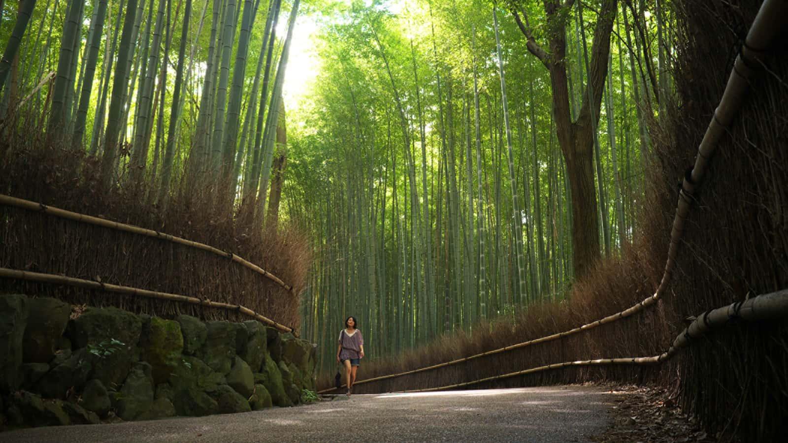 日本 | 京都四季酒店 (碧山专属福利)