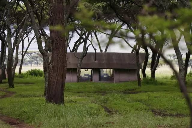 这个坦桑尼亚的营地不豪不奢,只用一颗心帮你在广袤草原上建个家